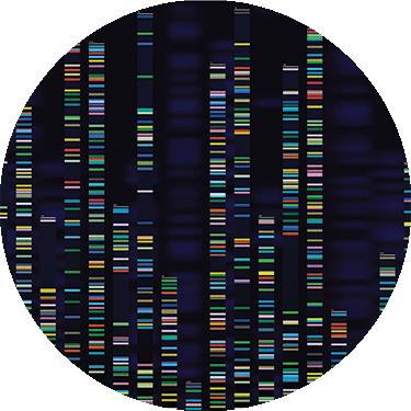 Stefania Boccia nel Board europeo per la condivisione dei dati genetici